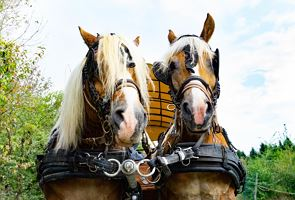 By horse-drawn carriage to the moor fields